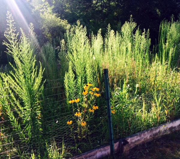 Maureen's garden last week.