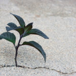 plant in a crack